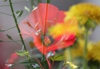 Kerti virágok.jpg